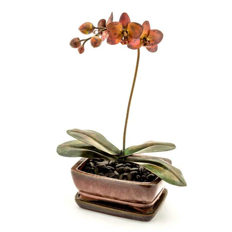 Phalaenopsis in Ceramic Planter #45