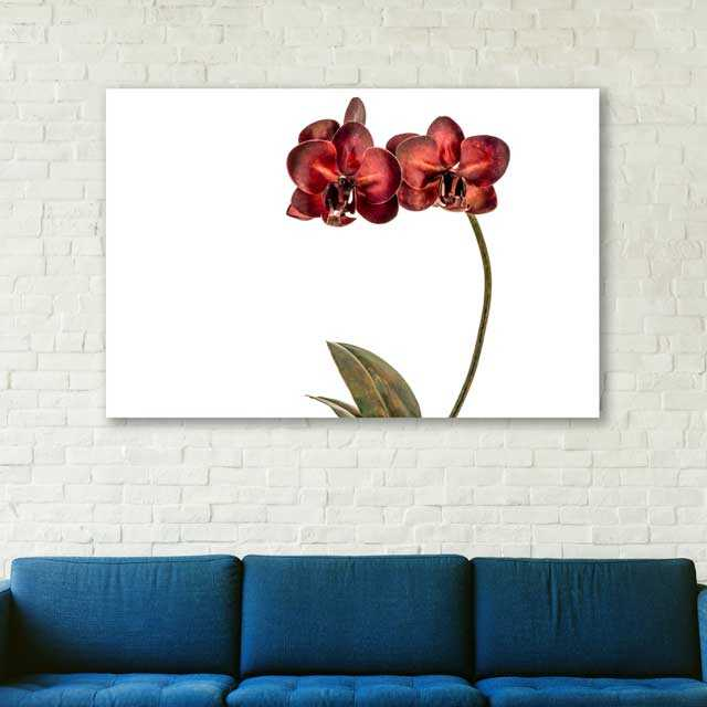 red orchid blue couch