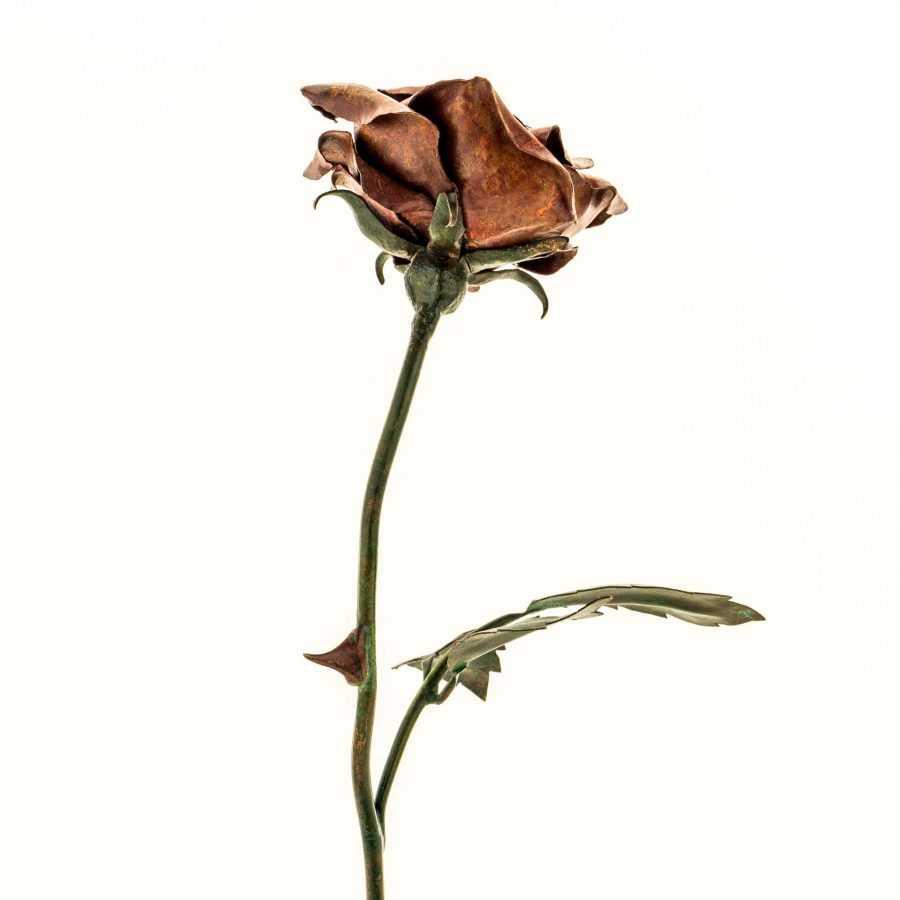 Opulent Lady Pink Rose #R08 – SOLD