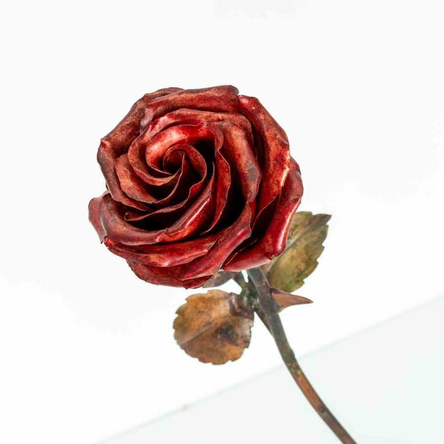 Red Lady Rose