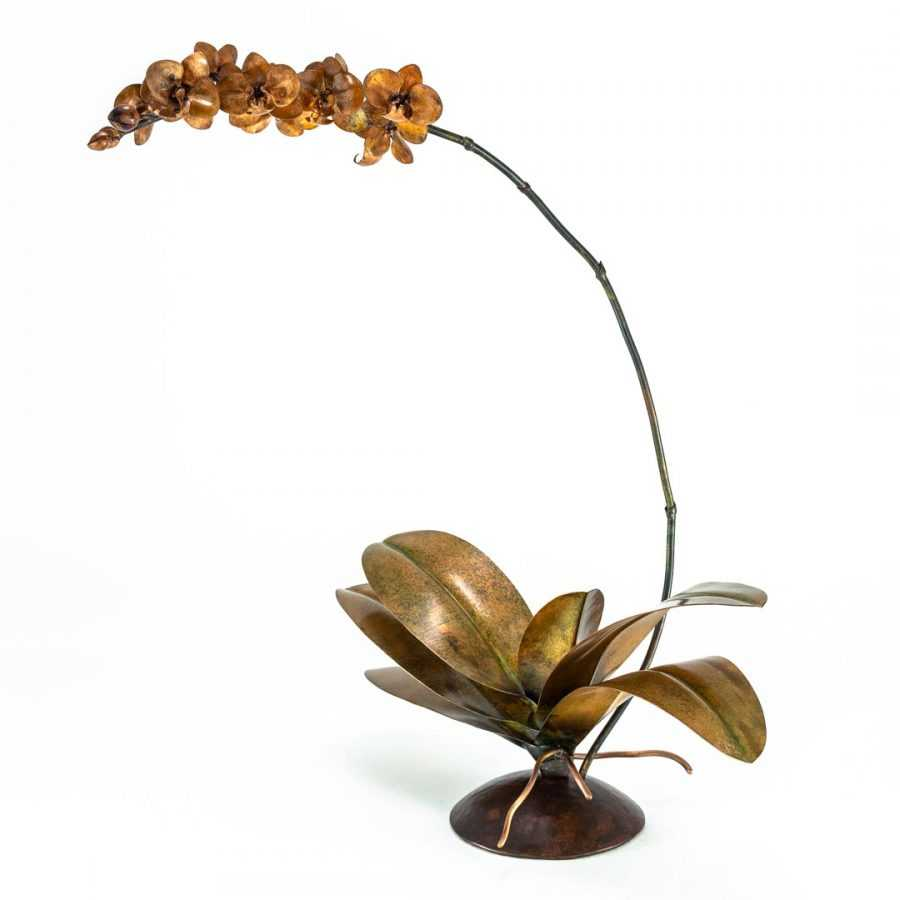 Copper Phalaenopsis #100