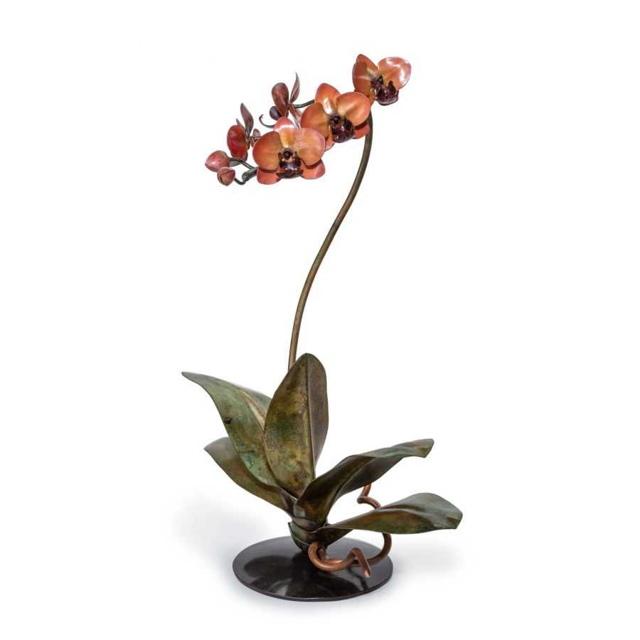Coral & Wine Phalaenopsis Orchid #223